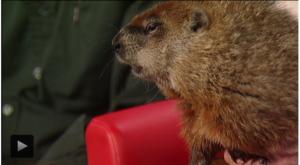 Fran Kitchen on Fox8 - Groundhog Day 2015
