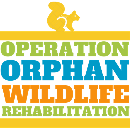 Rehabilitating Orphan and Injured Wildlife Since 1962