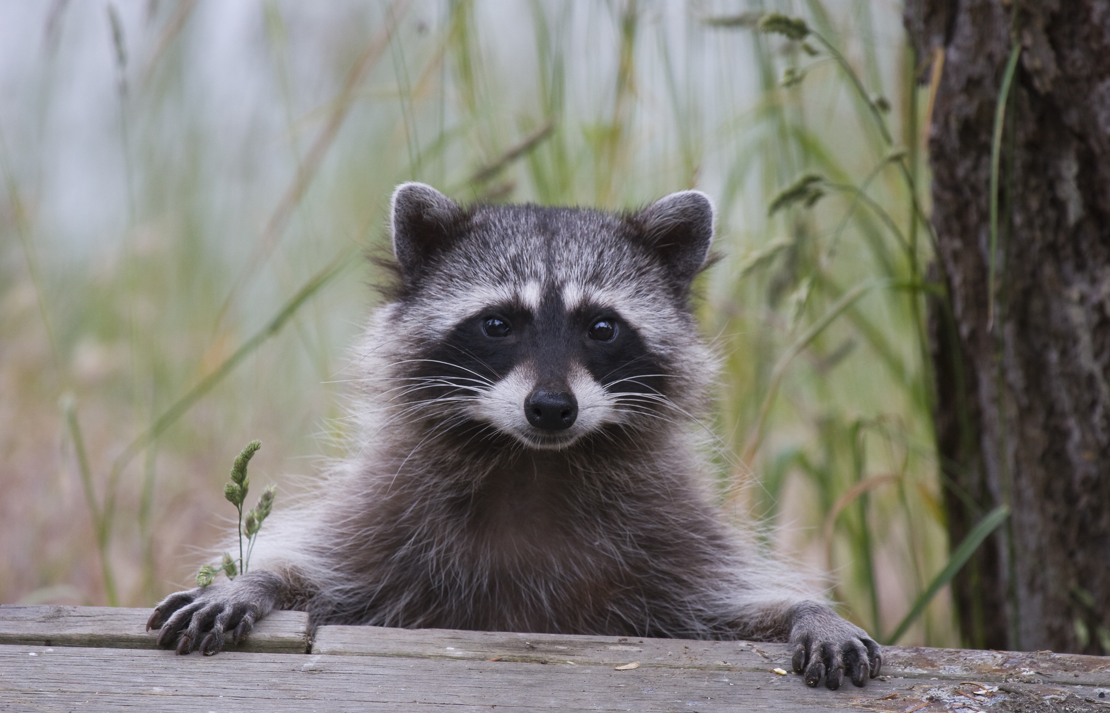 Rabies: What Do You Know?