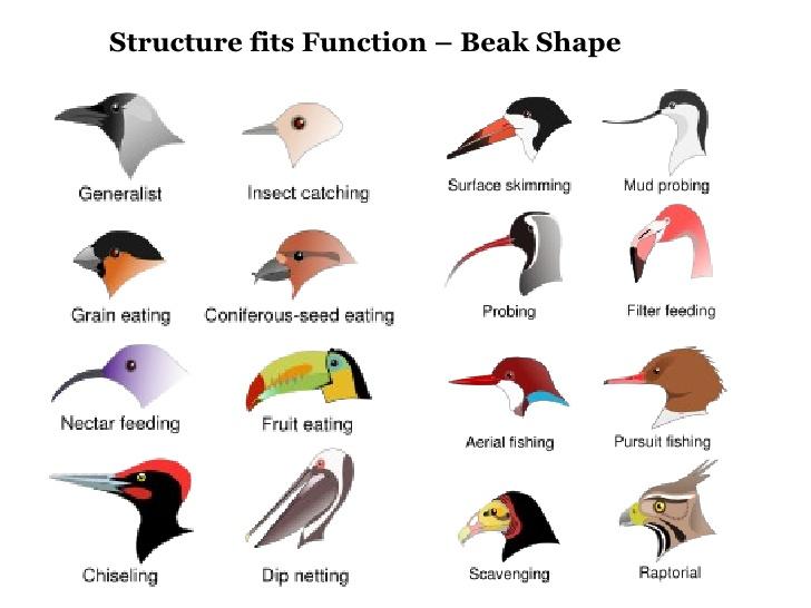 Bird Beaks Picture