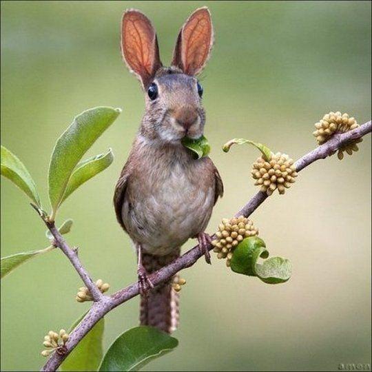 New Endangered Species…The Bunny Bird