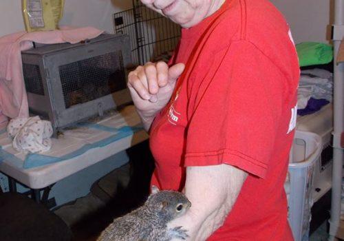 Squirrel With Fran